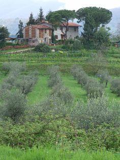 Collodi, Tuscany