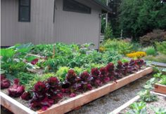 How To Build A Vegetable Garden On A Green Roof...I have always wanted to do this!!!