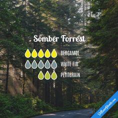 Somber Forrest - Essential Oil Diffuser Blend