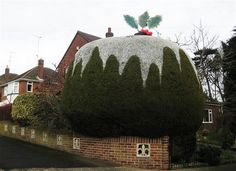 Topiary Christmas Pudding.  Tree sculpted into a giant putting by Roger and Valerie of Yeovil, UK. Complete with cream and holly on top.