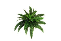 The Only Weed Identification Guide You'll Ever Need Silk Plants Direct Boston Fern Bush, Pack of 6 Leafy Plants, Silk Plants, Green Plants, Fern Plant, Trees To Plant, Plant Leaves, Plant Stem, Fake Flowers, Silk Flowers