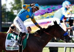 A tad slow out of the gate at the Belmont Stakes, the Kentucky Derby and Preakness winner American Pharoah seemed to glide to the lead in just two strides. Preakness Winner, Preakness Stakes, The Belmont Stakes, Triple Crown Winners, American Pharoah, Racehorse, Horse Racing, Kentucky Derby, Horses