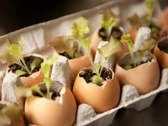 How-To: Eggshell Seedlings from CookingChannelTV.com
