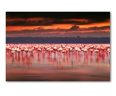Print op acrylglas Flamingos, multicolour, 40 x 60 cm | Westwing Home & Living