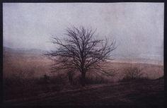 Cyanotype toned in oak bark and red wine.