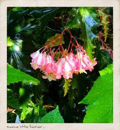 Woodland Forest, Natural World, Make You Smile, Diorama, Nature, Naturaleza, Dioramas, Nature Illustration, Off Grid