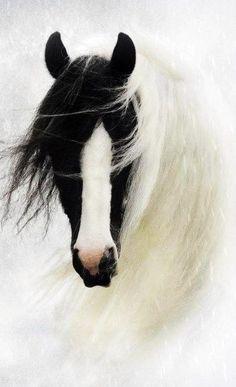 A real beauty | horse