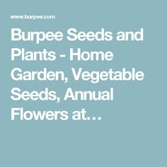 Burpee Seeds and Plants - Home Garden, Vegetable Seeds, Annual Flowers at…