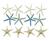 Variety Starfish Mix  12 Large Pieces 6-8 inches (4 White Finger / Pencil 4 Finger Pastel Color 4 Knobby / Armoured) by The Seashell Company