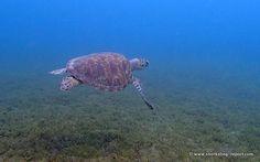 Snorkeling Report Malendure | Guadeloupe