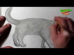 Как нарисовать кошку карандашом на бумаге.How to draw a cat pencil on paper - YouTube