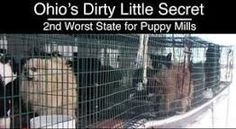 Schrock's Amish Farm and Village in Berlin, Ohio ...not a puppy mill ?