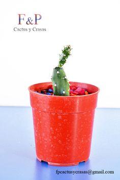 Cactus, Planter Pots