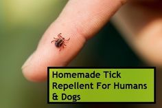 Homemade Tick Repellents For Humans and Dogs