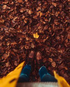 Autumn days! #seasons #fall #outono #autumn #fallseason #leaves #coloursofautumn