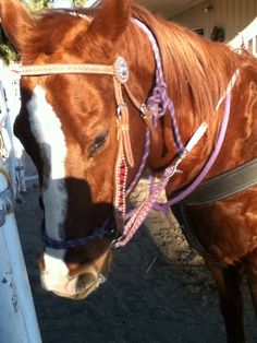 This is my horse I ride L.S