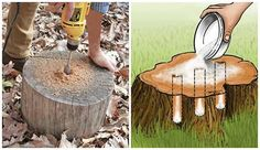 Epsom Salt Formula for Stump Removal - Epsom salt is the best substance to remove a tree stump if it is in your garden or lawn, since it enhances the quality of your soil. I have done this many times but not with this formula, I am so excited to test it out.