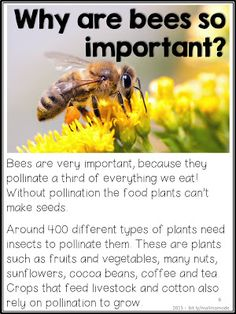 Bees and pollination - the 15 most importan questions to ask! (Especially Tips on how to teach children about the topic, and help save the bees! Combine reading, science, biology and crafts with two different projects! Bee Facts, Bee Activities, Bee Friendly, Environmental Education, Bee Theme, Bugs And Insects, Save The Bees, Bee Keeping, Teaching Kids