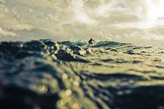 surf surf surf