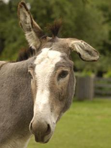 Cargo | The Donkey Sanctuary