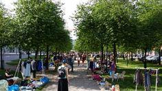 Puistokirppis, Leppävaara, Espoo