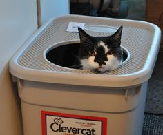 good idea for litter box in the motorhome