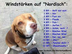 | Norddeutsch