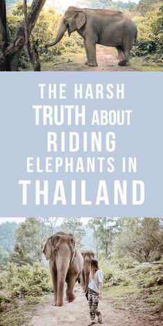 Everything you need to know about riding elephants in Thailand!