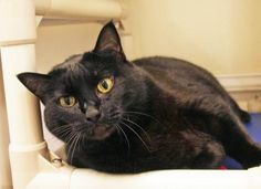 Tonka is available for adoption at Seattle Humane http://www.seattlehumane.org/adoption/cats