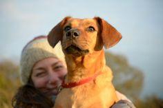EllieAndAda: Giving Thanks Giving, Labrador Retriever, Thankful, Dogs, Animals, Labrador Retrievers, Animales, Animaux, Animal Memes