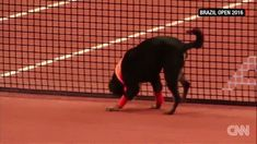They used shelter dogs as ballboys in this tennis tournament. This one didn't want to give the ball up so easily. http://ift.tt/2lvsQKG