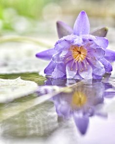 Lotus on the water by ligninate on 500px