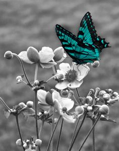 Teal Gray Wall Art Photography/Butterfly On by LittlePiePhotoArt