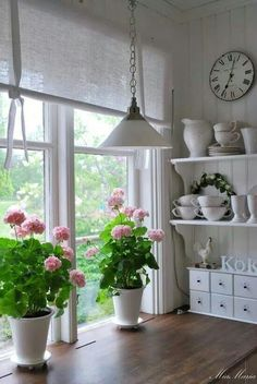 When I was a child my Mom had every windowsill in our house crammed with Geraniums. White Geraniums are my favourite.