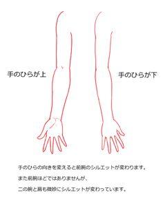 手のひらが上と下のときの腕の見え方の比較