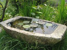 Hardy water lily in a stone trough on Flickr