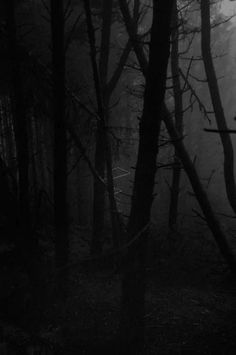 Season Of The Witch – A Southern Gothic Tale – filmscenes Gothic Aesthetic, Witch Aesthetic, Season Of The Witch, Southern Gothic, Dark Photography, Dark Forest, Dark Places, Shades Of Black, Worlds Of Fun