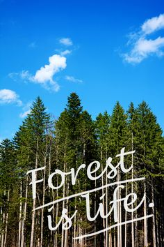 Forest is life and protection for animals and humans.  It´s an essential element for a sustainable planet.  Shutterstock.com Stockphoto-ID: 672770074  #forest #trees #wood #life #protection #animals #humans #substainable #planet #wald #bäume #leben #schutz #tiere #menschen #nachhaltig #welt #erde