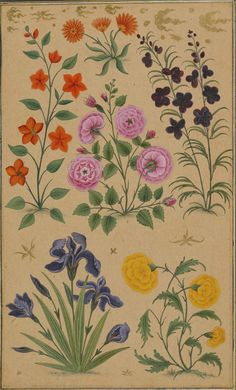 Flower studies. Attributed to Muhammad Khan, 1630-33. Add.Or.3129, f.67v