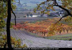 L'automne dans la campagne entre le Lot et la Garonne