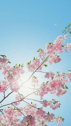 Смотря на это фото на целый день заряжаешься позитивом! Особенно весной!!!✌🏻✌🏻✌🏻