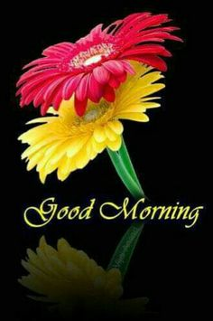 Good morning sister have a nice day Good Morning Beautiful Pictures, Free Good Morning Images, Good Morning Images Flowers, Good Morning Picture, Morning Pictures, Morning Pics, Morning Board, Night Flowers, Good Morning Roses