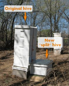 Last year, one of our hives swarmed 6 times. Each swarm involves dropping everything to capture and rehouse the wayward dames, none of which is easy to do with a full-time job. So this year, we spl…