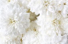 Beautiful white petals ~ Colors of the Wind