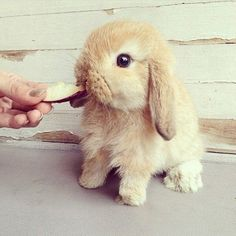 Aww.  Reminds me of one of Nolan's holland lops =]