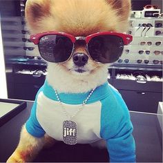 Owner: Self-employed Breed: Pomeranian Pet Projects: When this fluffy dog model isn't working (you can catc...