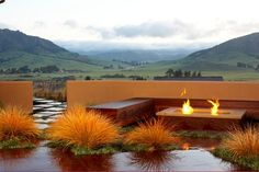 Anemanthele lessoniana (New Zealand Wind Grass) - other - Jeffrey Gordon Smith Landscape Architecture