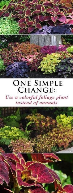 One Simple Change using colourful foliagebplants instead of perennials .. threedogsinagarden