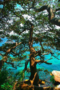Gnarly Tree & Beautiful View