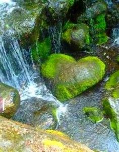 Happy St Brigid 's Feast Day and the first day of Celtic Spring ! Heart In Nature, Heart Art, I Love Heart, Happy Heart, Heart Pictures, Beautiful Pictures, Heart Shaped Rocks, St Brigid, Belle Photo